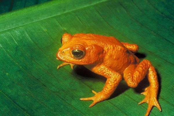 zhabka Осьминожки и жабка